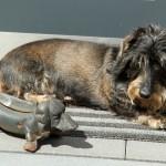 Der Hund von Familie Gistl