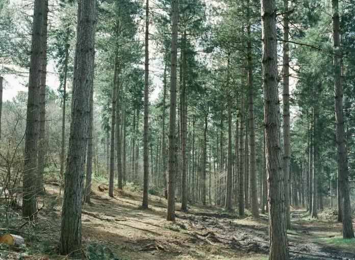 Wo viel Wald, da viele Fertighäuser.